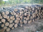 Lemne de stejar Дрова
